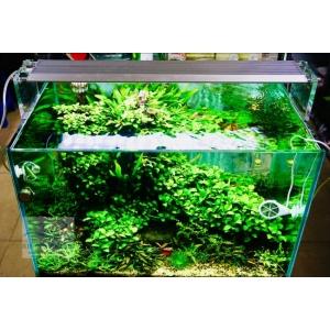 Đèn Week Aqua M450 Pro