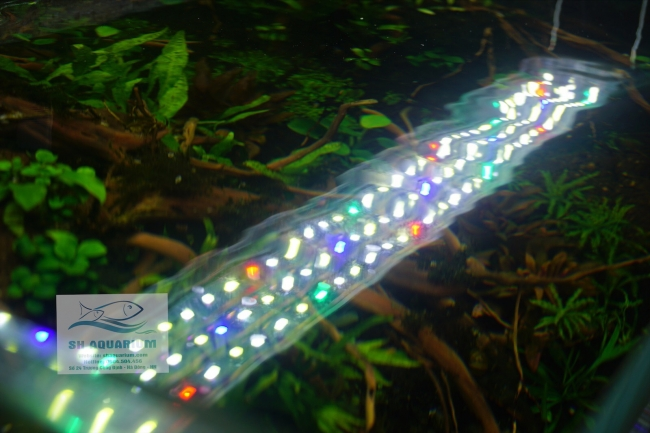 Đèn Led Odyssea A1 Pro Plant 300